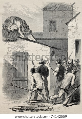 Old illustration of a tiger escaped from the Antwerp zoo, Belgium. Created by Pauquet, published on L'Illustration, Journal Universel, Paris, 1868 - stock photo