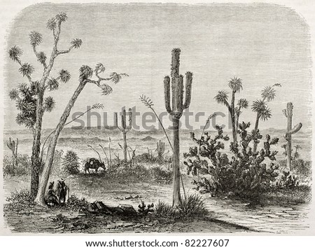 Old illustration of Cereus giganteus. Created by Lancelot and Maurand after report made under the direction of the U.S. secretary of the war. Published on Le Tour du Monde, Paris, 1860 - stock photo