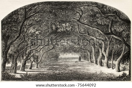 Old illustration of chestnut walk.  Created by De Bar and Cosson-Smeeton, after tablet of Rousseau in Khalil-Bey gallery. Published on L'Illustration, Journal Universel, Paris, 1868 - stock photo