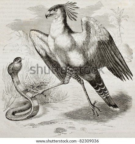 Old illustration of Secretarybird (Sagittarius serpentarius). Created by Kretschmer, published on Merveilles de la Nature, Bailliere et fils, Paris, 1878 - stock photo