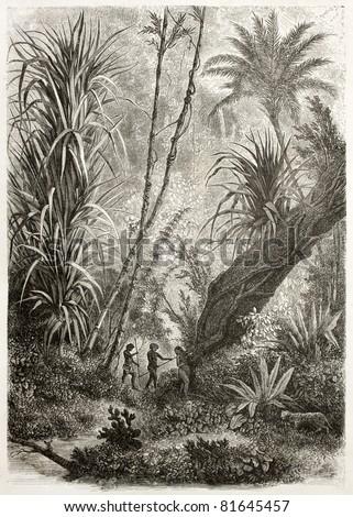 Old illustration of virgin forest in Car Nicobar, Indian ocean.  Created by De Bar after sketch of Steen-Bille, published on Le Tour du Monde, Paris, 1860 - stock photo