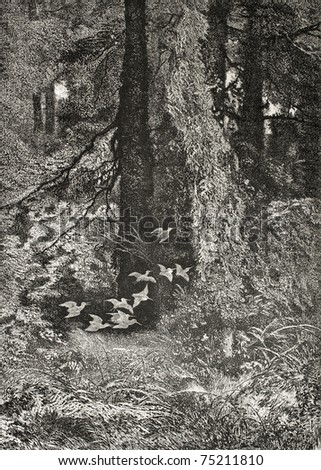 Old illustration of woodcocks flock in the forest. Created by Bodmer and Comte, published on L'Illustration, Journal Universel, Paris, 1868 - stock photo