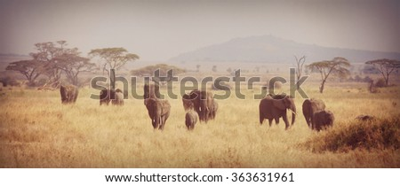 old instagram look photograph from a herd of elephants at the serengeti in Africa, soft focus - stock photo