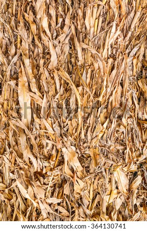 Old leaves of corn - stock photo