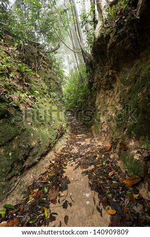 Old Logging Path at National Park in Penang, Malaysia - stock photo
