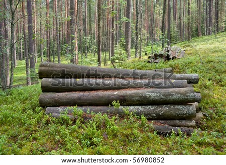 Old logs in the forest