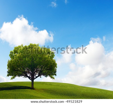 Old Lonely Tree - stock photo