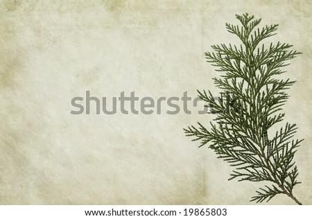 Old looking paper background with thuja foliage. - stock photo