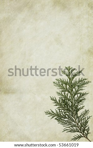 Old looking paper background with thuja foliage. Very detailed texture. Copy-space. - stock photo