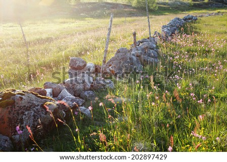 Old low stone wall at coastal meadow (salt meadow) in the evening sun in Helgeland, Norway. Focus on stone with moss. - stock photo