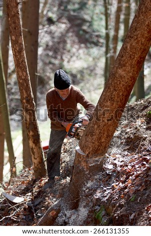 Old man cutting trees using a chainsaw in the forest - stock photo