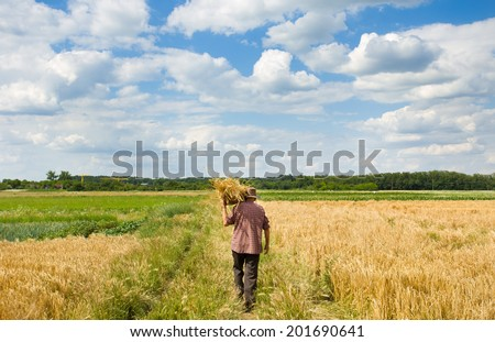 Old man with knitted basket on shoulder walking in barley field - stock photo