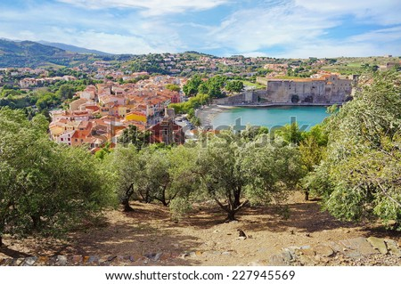 old Mediterranean village of Collioure with olive trees in foreground, Vermilion coast, Roussillon, Pyrenees-Orientales, France - stock photo