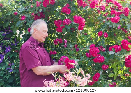 old men with rose in garden - stock photo
