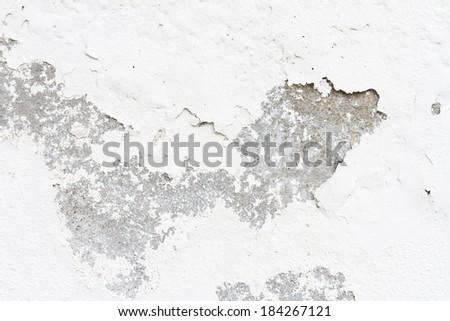 Old moldy wall - stock photo