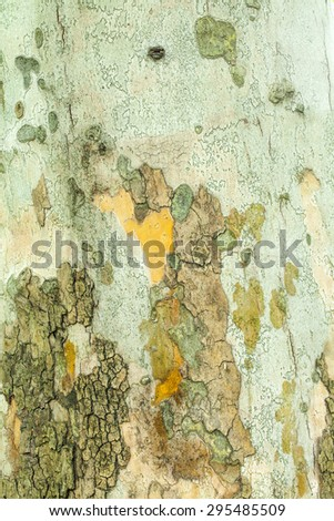 Old mossy tree bark texture closeup - stock photo