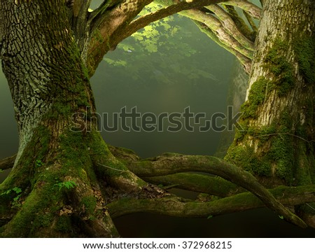 Old mossy trees with crooked branches and roots