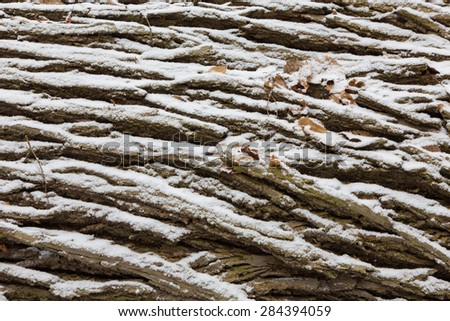 Old oak bark in snow with some dry leaves background