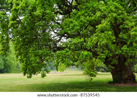 old oak tree with green leaves standing alone in a field - stock photo