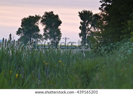 Old open bulrush, Typha latifolia, with reed near water - stock photo