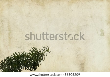 Old paper background with a conifer branch. - stock photo