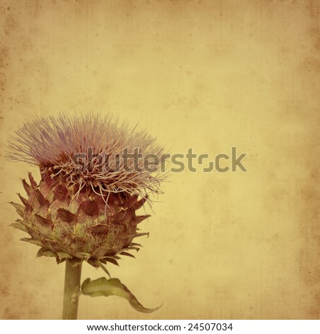 old paper background with Cynara cardunculus