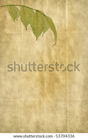Old paper background with foliage of Wisteria. Detailed canvas texture. Copy-space. - stock photo