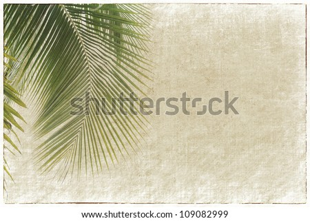 old paper background with palm leaf - stock photo