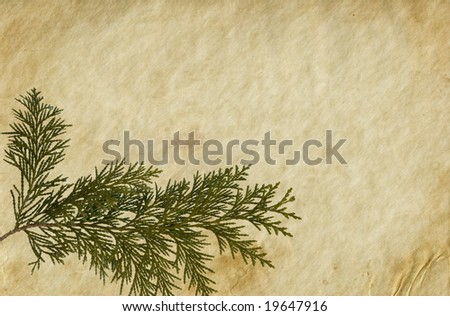 Old paper background with Thuja twig. - stock photo