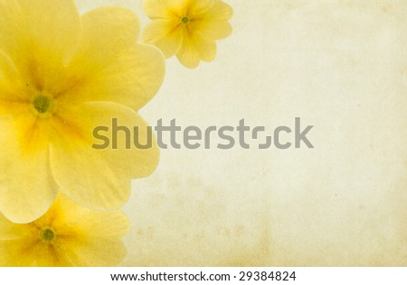 Old paper background with yellow paigle flowers. Copy-space. - stock photo