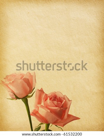 old  paper textures with roses - stock photo