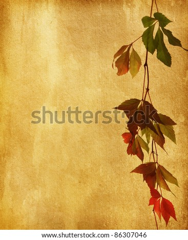 old paper with  autumn leaves. wild vine
