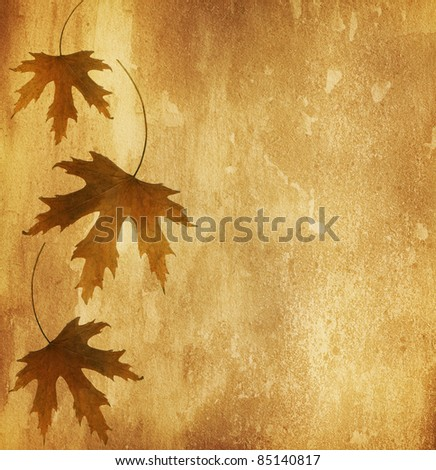 old paper with  dry autumn leaves - stock photo