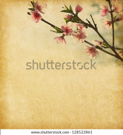 Old  paper with peach blossom - stock photo