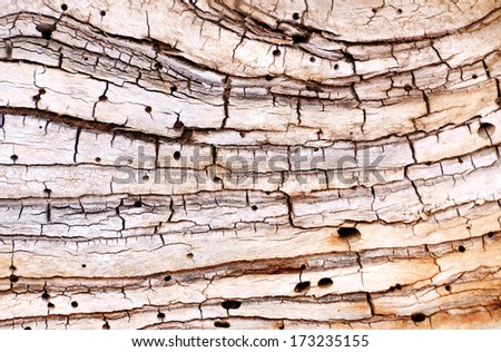 Old patient tree - stock photo