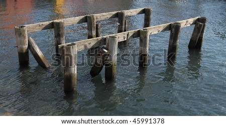 Old pilings in a harbor - stock photo