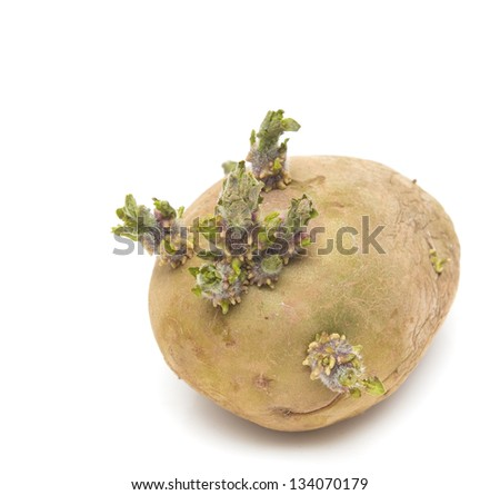 old potatoes on a white background - stock photo