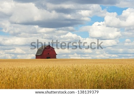 old red barn in wheat field - stock photo