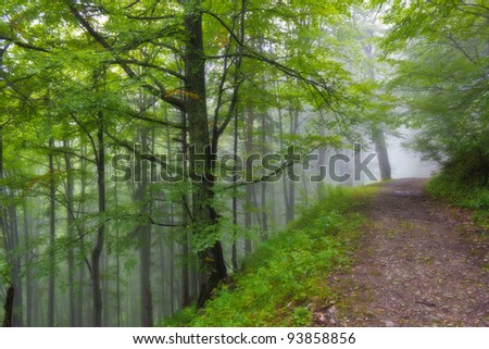 Old road in misty forest - stock photo