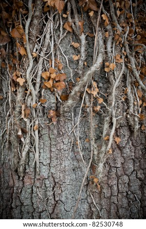 Old roots growing down an autumn oak tree - stock photo