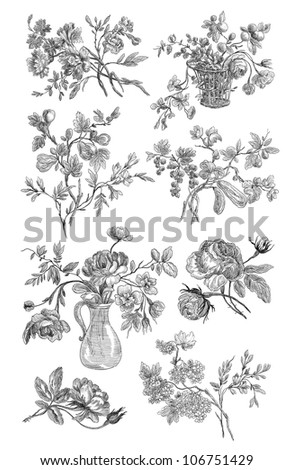 Old roses illustration - stock photo
