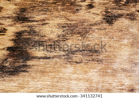 Old rotten moldy wood texture background - stock photo