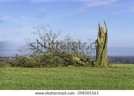 Old Rotten Tree in the middle of a field felled by Winter Storm - stock photo