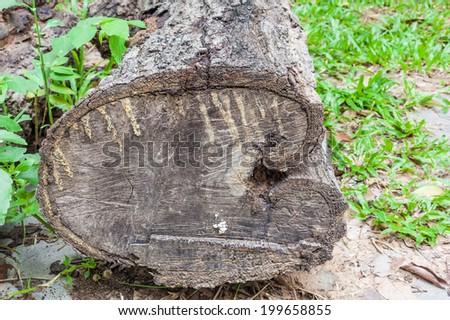 Old rotten wood - stock photo