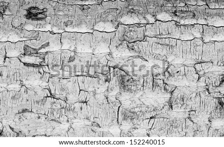 Old rough tree bark background texture