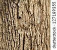Old rough tree bark background texture organic patterns - stock photo