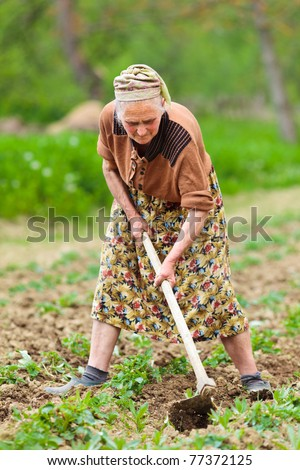 Old rural woman weeding through potato rows in a field, manual labor - stock photo
