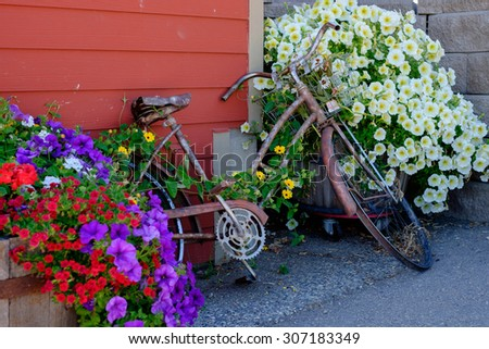 Old rusted bike with bright flowers