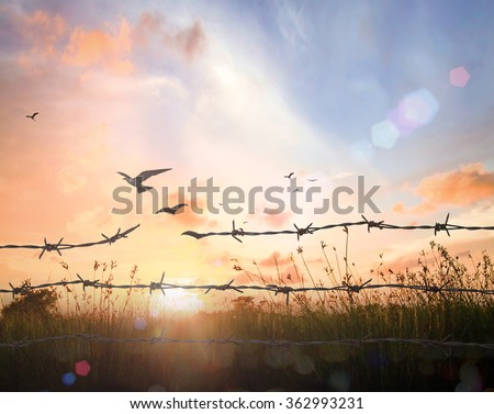 Old rusty barbed wire transform into flying birds. Slavery Freedom Sin Forgiveness God Repentance Helper Redeemer Spring Time Eco Friendly Earth Day Brave Decision New Life Right Unlock Flee concept. - stock photo