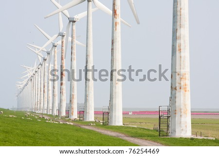 Old rusty windturbines with sheep and tulip fields